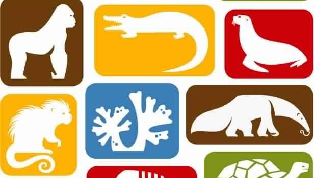 Valorisation des ressources animales